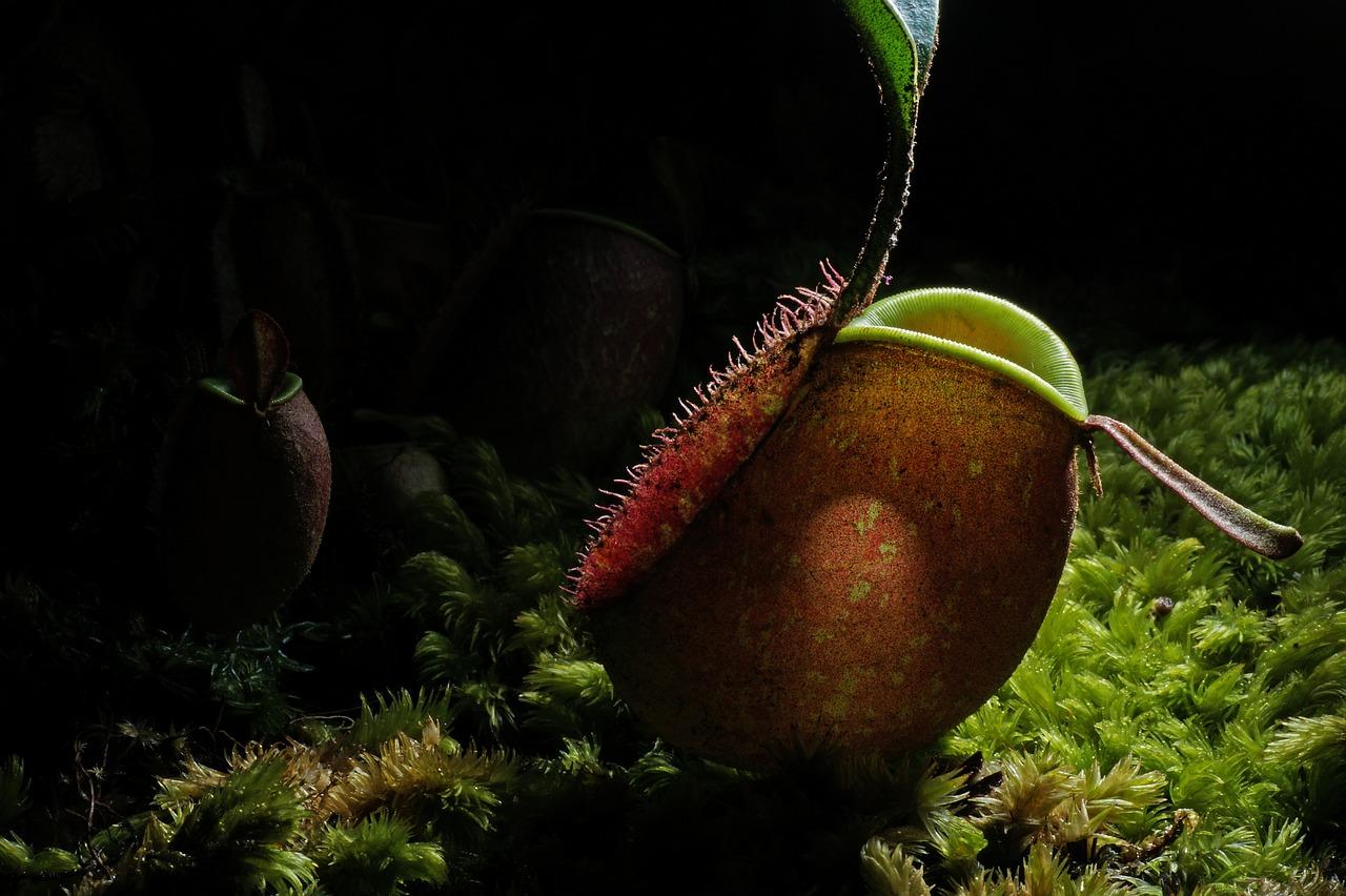 piante carnivore in salotto