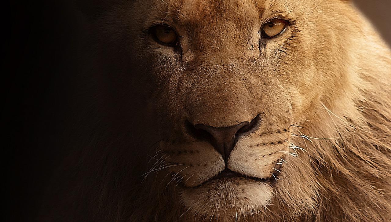 Astrid Lindgren - Brothers Lionheart